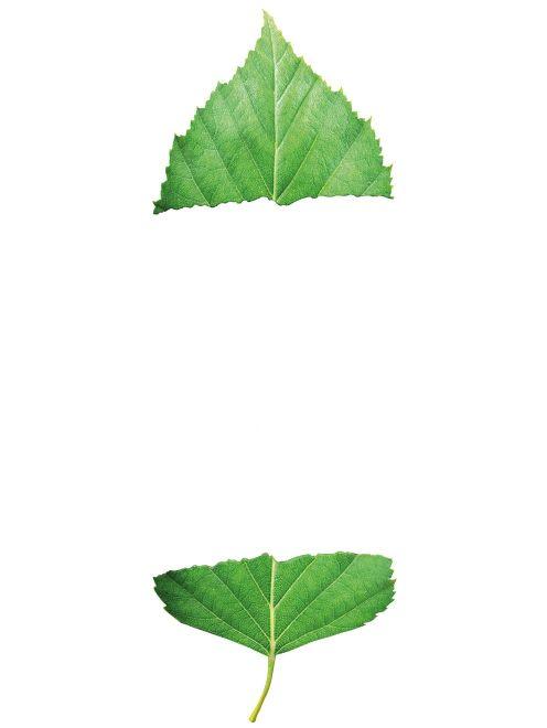 Icons of Birch/Birch_Spliticon.Jpg -